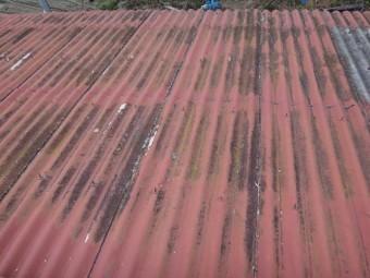 伊賀市工場スレート屋根に苔の畑
