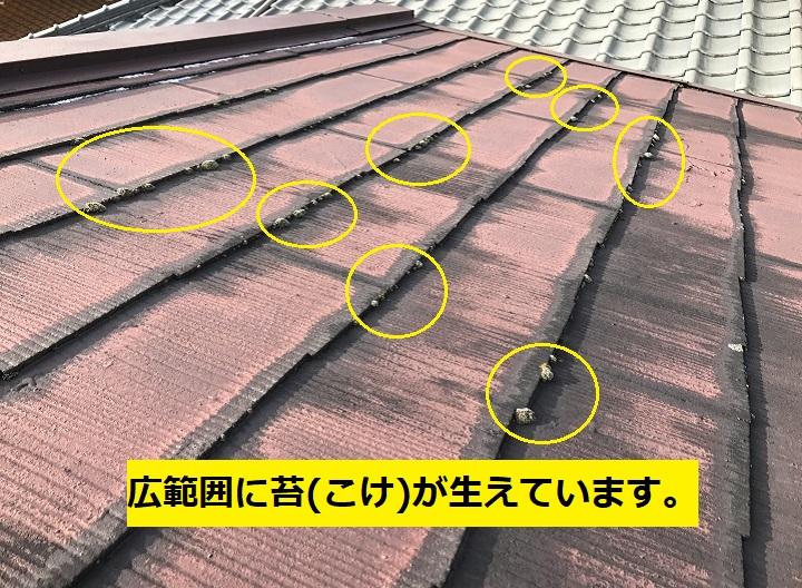 名張市 カラーベスト苔の写真