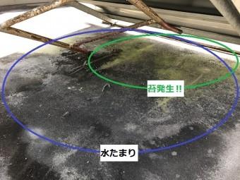 伊賀市 陸屋根に苔が生える
