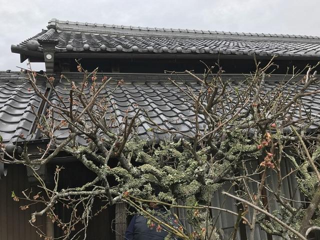 伊賀市 日本家屋 瓦屋根