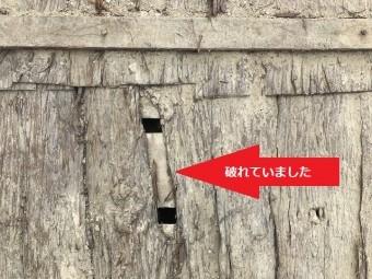 伊賀市 杉皮が破れている