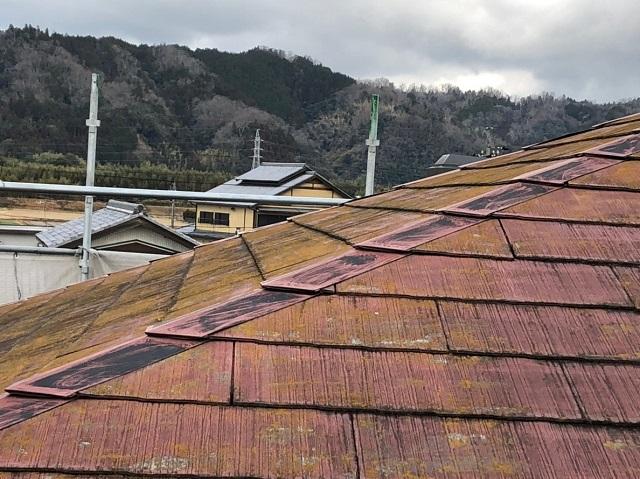 屋根 下見